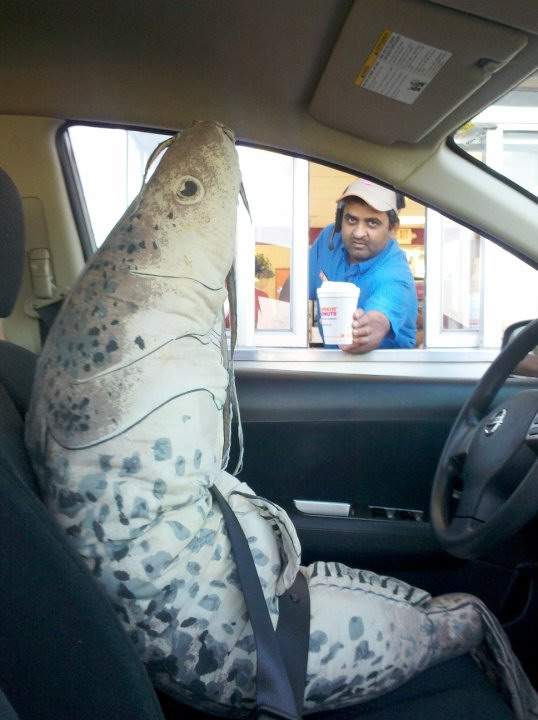 Hey achmed ...  You wanna see my fish stick ?