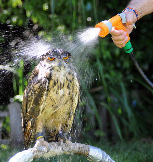 How to clean your owl.  Step 1: Spray thoroughly. Step 2: Ignore sad face.