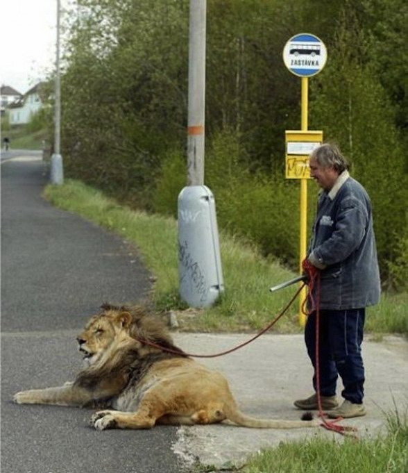 pet store suicide assistance lion guaranteed poke metal pipe times